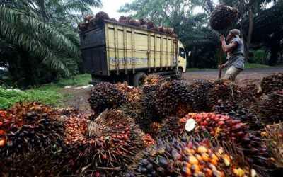 Tantangan Menggapai Cita-cita Biodiesel