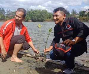 PDI-P Aceh Tanam Manggrove