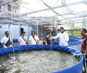 Bisnis Ikan Lele Beromzet Puluhan Juta Rupiah