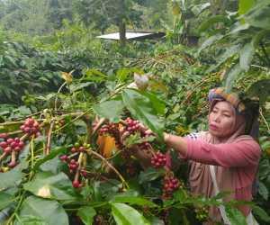 BMKG Gelar Sekolah Lapang Iklim Operasional Bagi Petani di Gayo Lues